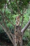 Monkey 3. Monkey near the beach in Ao Nang, Thailand Royalty Free Stock Images