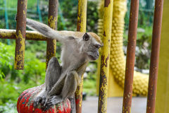 Monkey near the cave in Malaysia Stock Image
