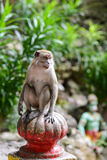 Monkey near the cave in Malaysia Stock Images