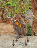Monkey nearly entrance to Khao Luang cave Royalty Free Stock Photos