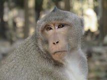 Monkey nella giungla Fotografie Stock