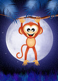 Monkey in the night Stock Images