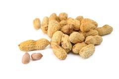Monkey Nuts Stock Photos