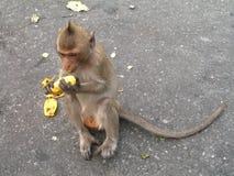 Monkey o assento na estrada e comer a banana em algum lugar em Tailândia Fotografia de Stock Royalty Free