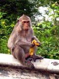 Monkey o assento na parede e comer a banana em algum lugar em Tailândia Foto de Stock
