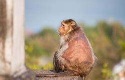 Monkey old Stock Image