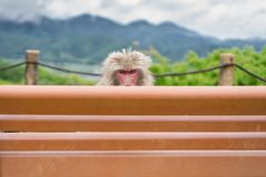 Monkey over bench Stock Images