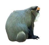 Monkey over white Royalty Free Stock Photos