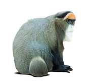 Monkey over white with shade Stock Images