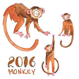 Monkey painted in watercolor Royalty Free Stock Image