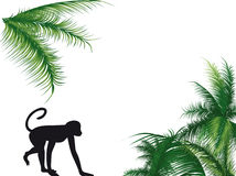 Monkey and palm vector illustration