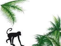 Monkey and palm Stock Image