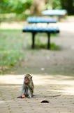 Monkey in park Stock Photo