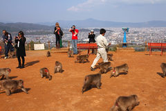 Monkey park in Arashiyama, Kyoto Stock Image