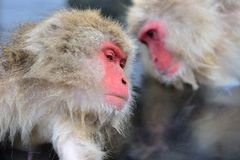 Monkey Park Stock Images