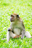 Monkey in park Stock Image