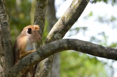 Monkey in a park royalty free stock photo
