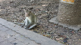 Monkey park thailand Royalty Free Stock Images