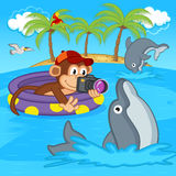 Monkey photograph of dolphins Royalty Free Stock Photo