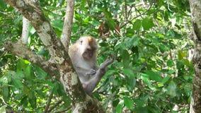 Monkey picking flea at the tree.