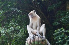 MONKEY ON A PILLAR IN BATU CAVES MALAYSIA Royalty Free Stock Images