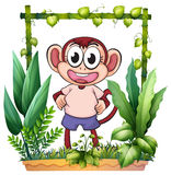 A monkey with a pink shirt Stock Photography