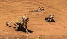 Monkey play water Stock Photo