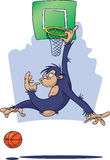 Monkey playing Basketball Stock Photography