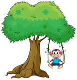 A monkey playing swing on tree Royalty Free Stock Photos