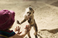 Monkey Playing With Toddler Girl Royalty Free Stock Images