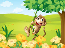 A monkey playing with the vine plant Stock Image