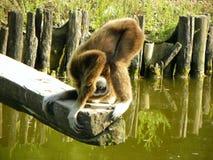 Monkey playing Stock Images