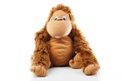 Monkey plush toy in studio. brown monkey,cute monkey,fake monkey,plush monkey,toy monkey,chimpanzee,jocko,gorilla Stock Images