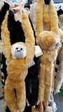 Monkey plush toys Royalty Free Stock Image