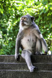 Monkey portrait in Bali Stock Photos