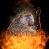 Monkey portrait Royalty Free Stock Photography