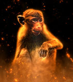 Monkey portrait in fire Stock Photo