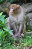 Monkey portrait Stock Photos