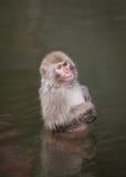 Monkey stock image