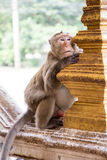 Monkey. Posing as the bored Royalty Free Stock Photography