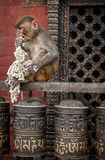 Monkey on prayer wheels in Nepal Royalty Free Stock Photography