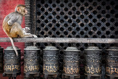 Monkey on prayer wheels in Nepal Royalty Free Stock Image