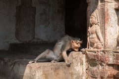 Monkey prays to God. The monkey lay near the statue of the Godhead in an interesting pose Stock Photo