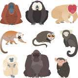 Monkey and primate collection. Cartoons Royalty Free Stock Photography