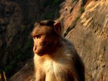 Monkey in profile Stock Image