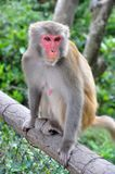 Monkey on the rail. In Hong Kong Royalty Free Stock Photography