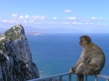 Monkey on Railing in Gibraltar. A photo of a monkey sitting on a railing at a scenic overlook in Gibraltar Stock Images