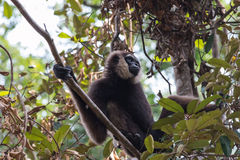 Monkey. In rain forest / indonesia Royalty Free Stock Photos