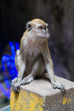 Monkey in Ramayana cave in Batu Caves complex,  Malaysia Royalty Free Stock Photos