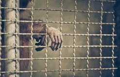 Monkey reaching its hand out from a cage Stock Images